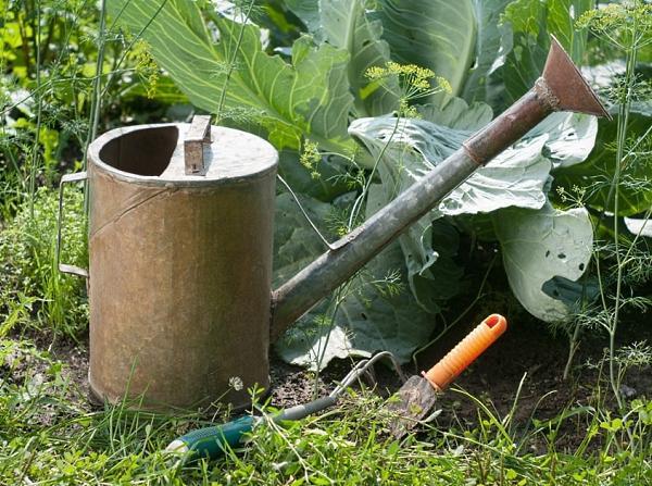 Готовим подкормку для капусты