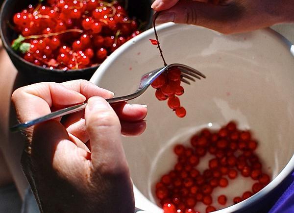 Подготавливаем красную смородину
