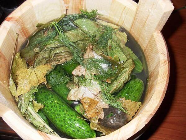 Рецепт бочковых огурцов на зиму в бочке. Как засолить?