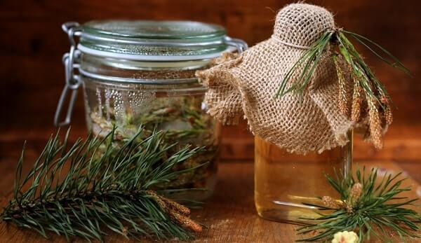 Мёд на еловых почках