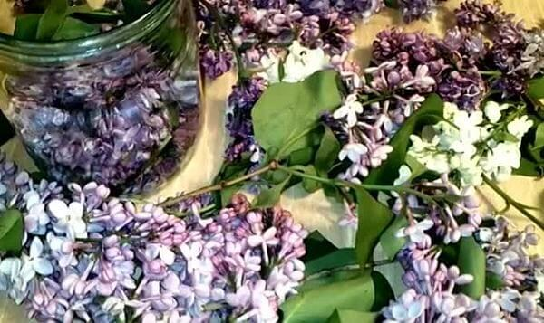 Складываем цветки сирени в банку