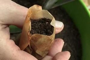 Использование чайных пакетиков для выращивания рассады