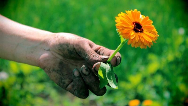 Уход за руками после огорода