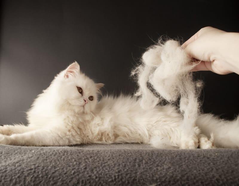 Как почистить диван от кошачьей шерсти?
