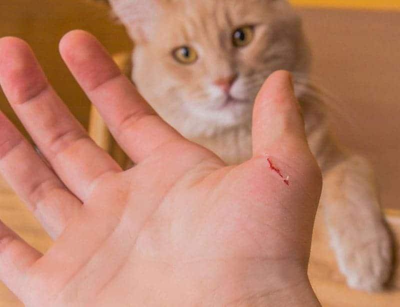 Царапина на руке от кошки