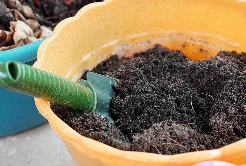 Обеззараживание почвы в домашних условиях