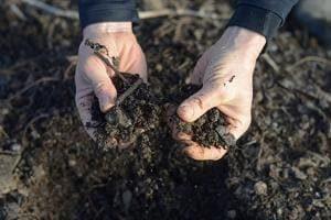 Как обеззаразить почву для рассады?