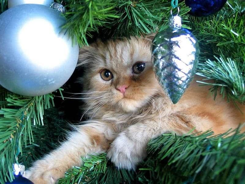 Кошка на ёлке