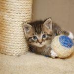 Котёнок у когтеточки