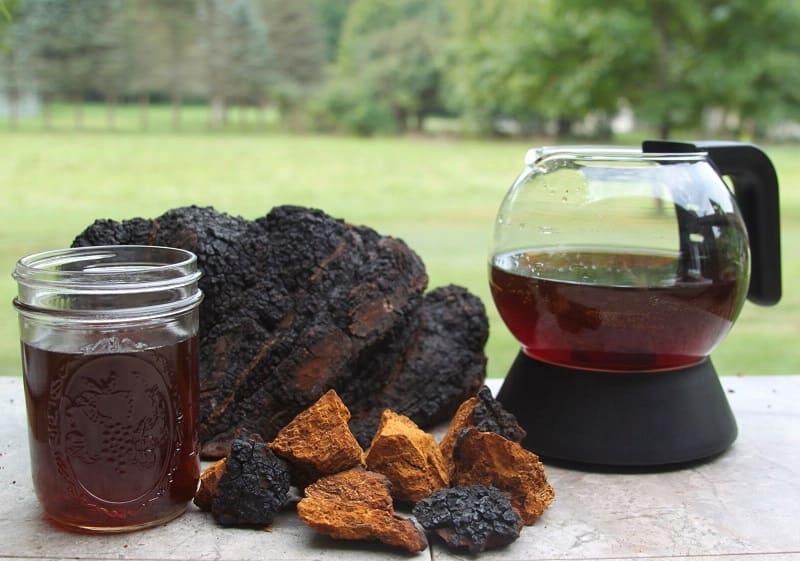 Как приготовить чагу березовый гриб?
