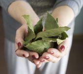 Освежаем воздух лавровым листом