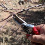 Экспресс-тест на здоровье плодовых деревьев после зимы
