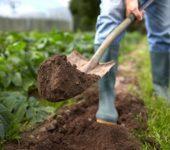 Тест почвы на участке с помощью лопаты