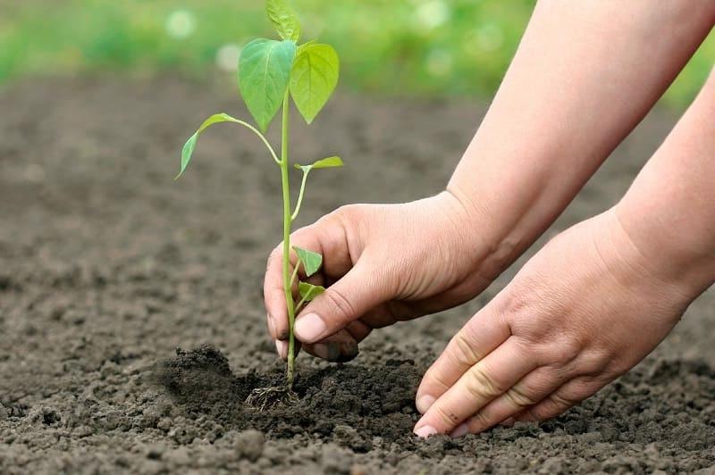 Как защитить руки при работе в огороде?
