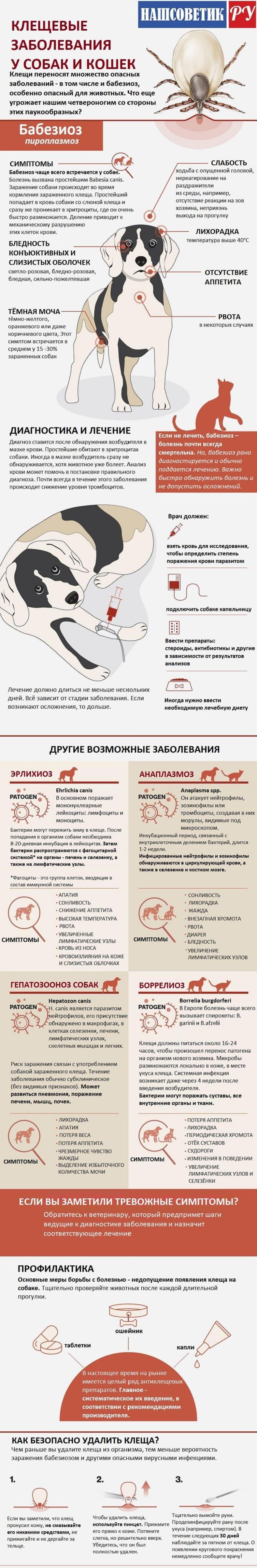 Клещи у собак и кошек. Инфографика