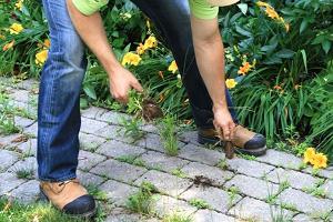 Сорняки на садовой дорожке