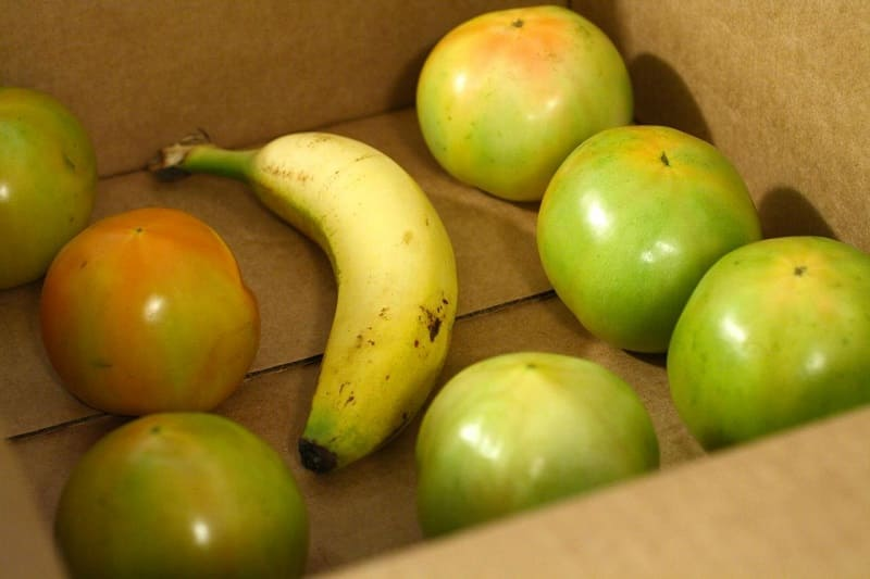 Дозревание томатов с бананом