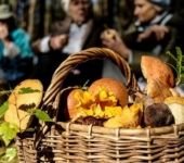 Сбор грибов в лесу