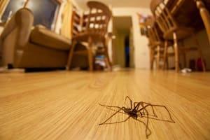 Паук на полу в квартире