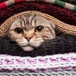 Шерсть от кошки на одежде
