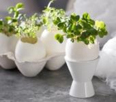 Кресс-салат в яичной скорлупе