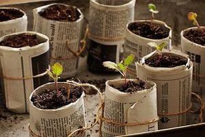 Горшочки из газеты для выращивания рассады