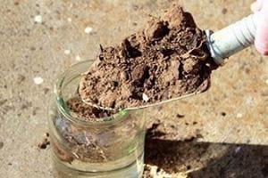 Определем кислотность почвы
