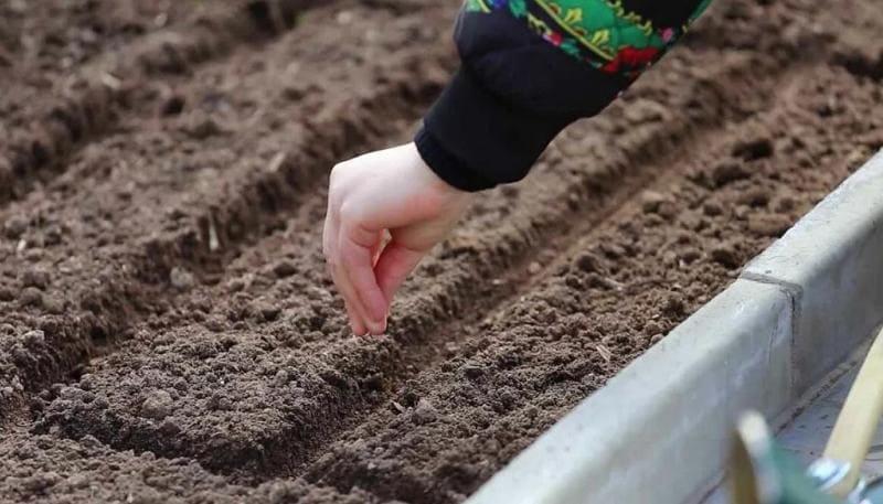 Посев семян в почву весной