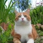 Кошка в саду