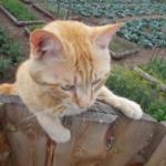 Кот на огороде