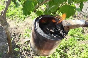 Окуриваем дымом плодовые деревья от тли
