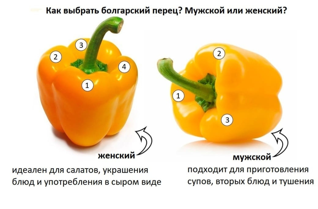 Отличие женского и мужского болгарского перца