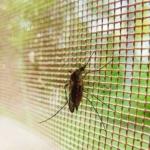 Комар дома на оконной сетке